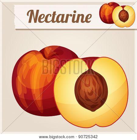 Nectarine.  Detailed Vector Icon