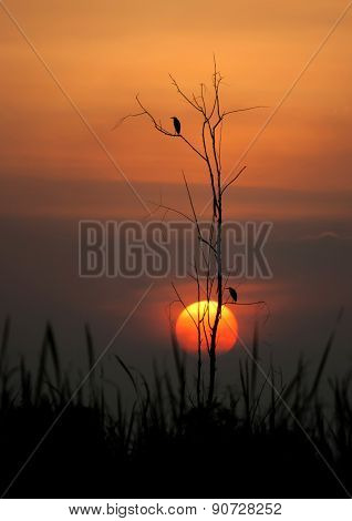 Silhouette  Birds On A Tree At Sunset