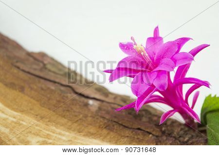 Gorgeous Pink Flower On A Rustic Wooden Board