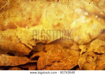 autumn magnolia leaf, very shallow focus, macro photography