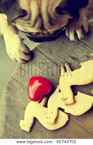 Beautiful male Pug puppy truing to get cookies in shape of a ferret on a wooden table background