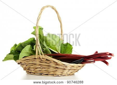 Freshly harvested rhubarb stalks in a basket isolated on white background