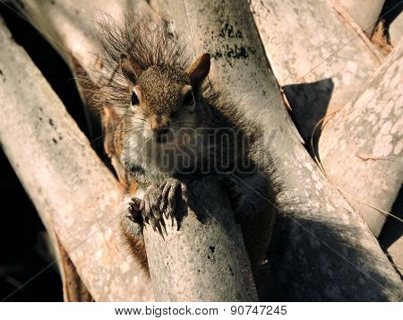 Portrait on an Eastern Grey Squirrel