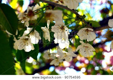 Spring flowers blossom background