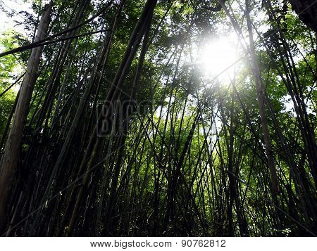 sunspot through bamboo wood