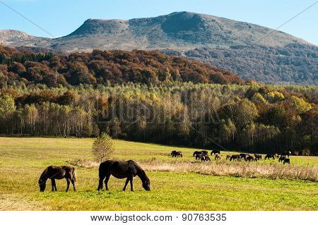 horses in the mountain