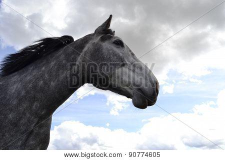 epic horse
