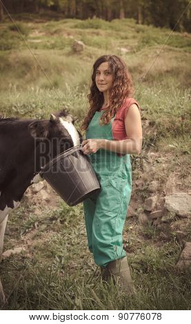 Farmer Feeding Cows