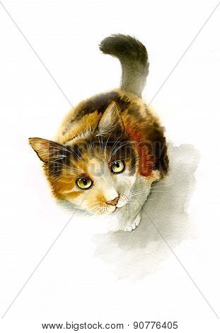 Motley Cat Looking Up Watercolor Illustration
