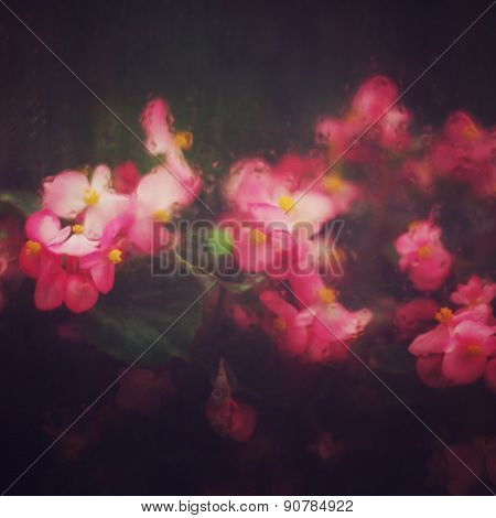 Abstract Nature Background With Pink Flowers