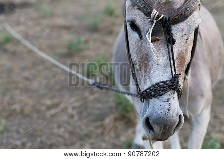 Donkey In A Field In Sunny Day, Animal Series, Close Up