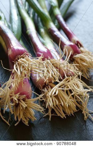Close Up Of A Bunch Of Red Scallions