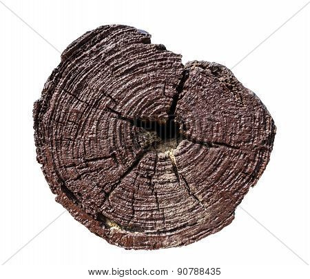Isolated Tree Stump