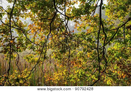 Leaves and tree branches.