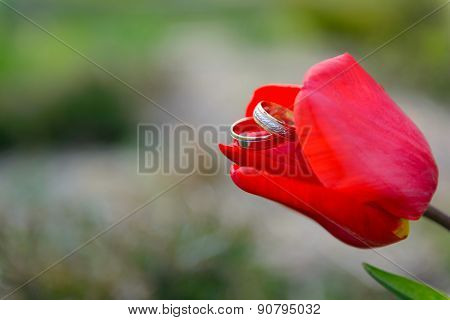 Wedding rings in a red tulip