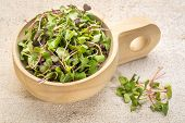 picture of pea  - organic micro greens  - JPG