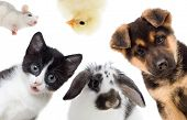 picture of rats  - Puppy and kitten and rabbit and bird and rat - JPG