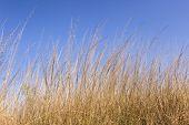 stock photo of wilder  - Grass against blue wilderness wildlife  african landscape - JPG