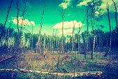 pic of wetland  - Vintage photo of wetlands at springtime - JPG