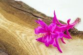 stock photo of decoupage  - Gorgeous pink cactus flower on a rustic wooden board - JPG