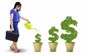 stock photo of indian money  - Portrait of businesswoman watering the money trees to keep its growth isolated over white - JPG