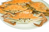foto of carapace  - Streamed crab Seafood isolated on white background  - JPG