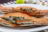 pic of cooked blue crab  - Close up face of streamed blue crabs  - JPG