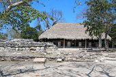 picture of mayan  - Mayan ruins at San Gervasio of Cozumel - JPG