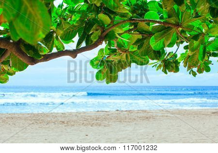 Beautiful Blue Waters Of Hawaii Seen Through Green Leafy Branch