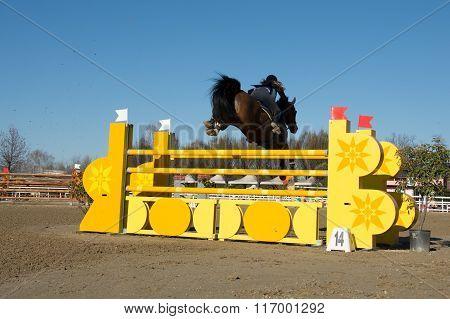 Hors Jump The Hurdle
