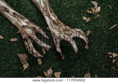 Horror And Halloween Theme: Terrible Zombie Hands Dirty With Black Nails Lie On The Green Grass, The