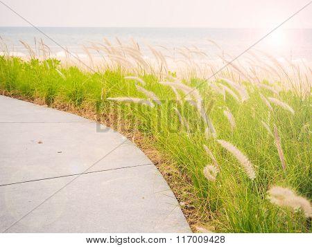 Natural grass beside the beach