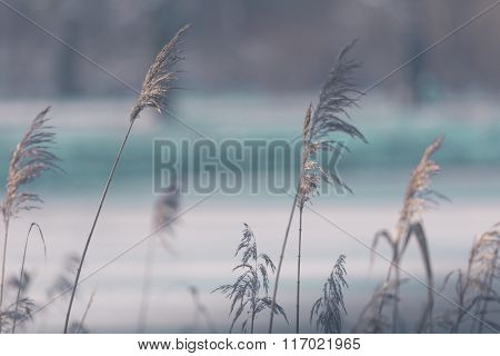 Dry Grass In Spring Time, Poland.