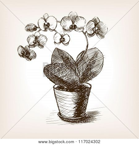 Orchid flower hand drawn sketch style vector