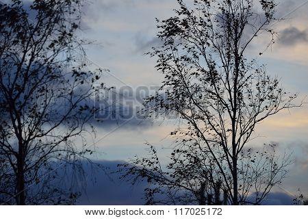 Black autumn tree against sunset sky