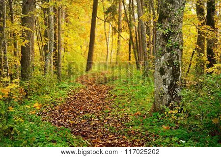 Alley In The Park During The Golden Autumn. Sigulda, Latvia