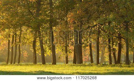 Autumn alley in an oak tree park in Sigulda, Latvia