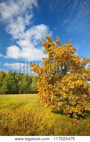 Autumn Landscape with yellow foliage against blue sky
