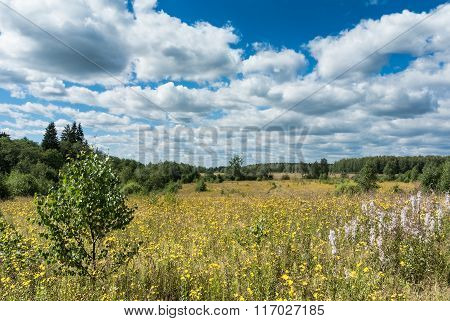 Meadow With Yellow Wildflowers