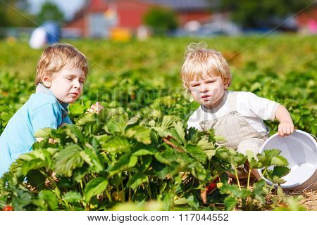 Two little twins boys on pick a berry farm picking strawberries