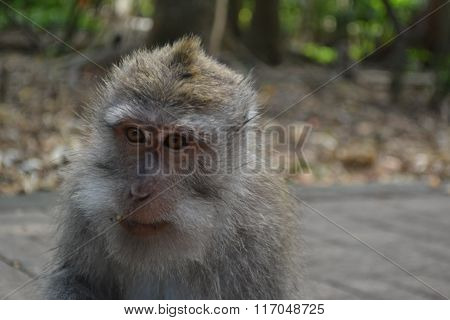 Monkey Animals