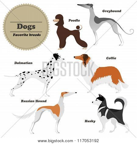 Image Set Of Dogs Greyhound, Russian Hound, Husky, Poodle, Dalmatian, Collie. Vector Illustration.
