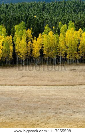 Open Field Leads To Changing Aspens.dng