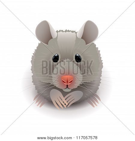 Hamster Isolated On White Vector