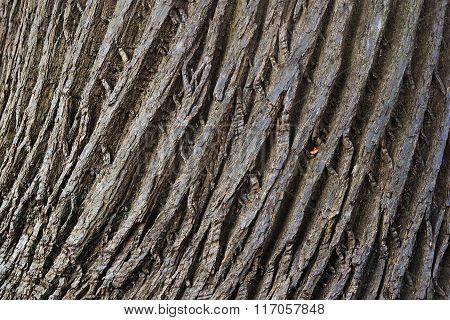 Wooden Cork. Tree Bark Texture.