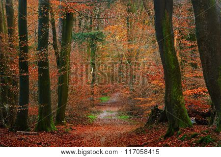 Alley in a colorful autumn forest in Veluwe, the Netherlands