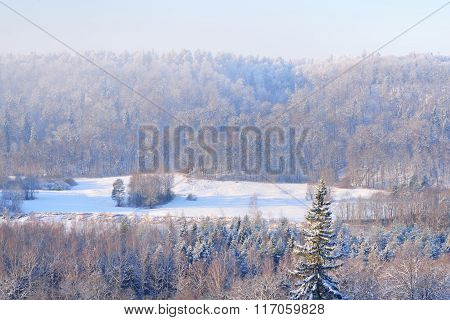 Winter Wonderland View Of Gauja River Valley And Pine Forests During Strong Frost In Winter