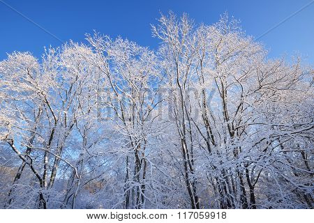 Winter Wonderland With Hoarfrost And Snow Covered Trees On A Sunny Day