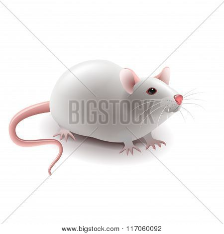 White Rat Isolated On White Vector