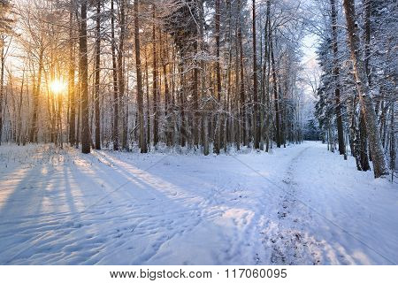 Footpath In A Snowy Deciduous Forest During Sunset